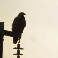 Eagles weekend