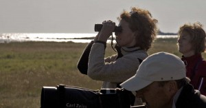 Wake up to birdsong! Photo: Jim Sundberg/GotlandNature.Com.
