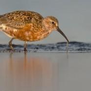 Fågelfotokurs – kom igång med fågelfotografering
