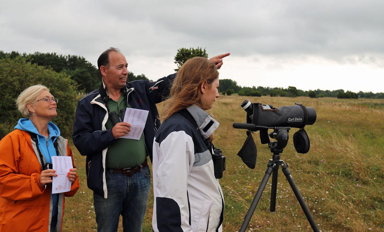 Naturguidning på Gotland: Fågelskådning i Västergarn. Foto: Jim Sundberg/GotlandNature.Com.