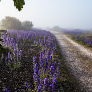 Botanikvecka i maj