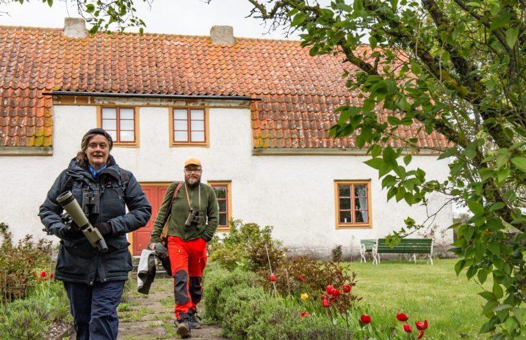 Fågelvecka i maj på Gotland.