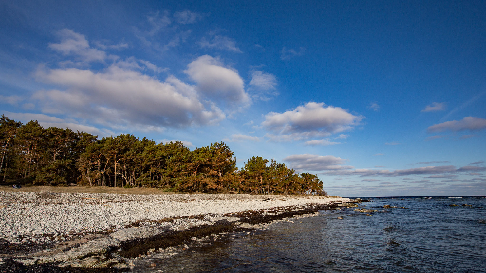 Wake up to birdsong. Fårö. Photo: Jim Sundberg/GotlandNature.