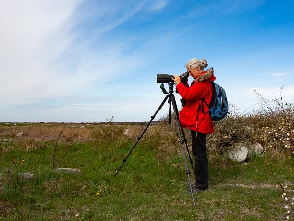 Coronafri fågelkurs: Med tubkikare ser du fåglarna väldigt tydligt. Foto: Jim Sundberg