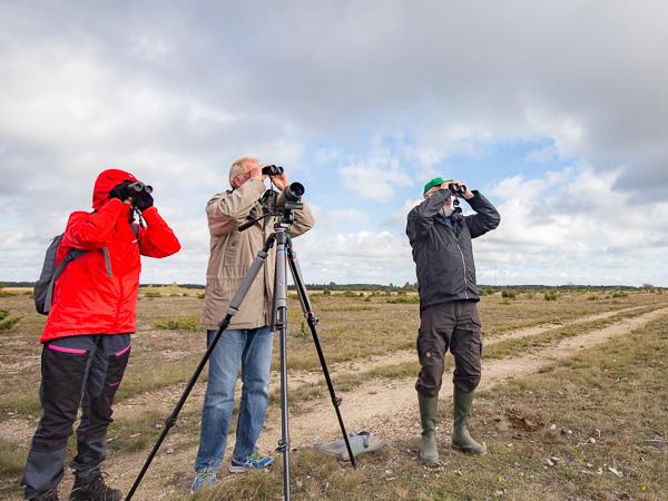 Coronafri fågelkurs: På Muskmyr brukar det vara gott om rovfågel. Foto: Jim Sundberg/GotlandNature.
